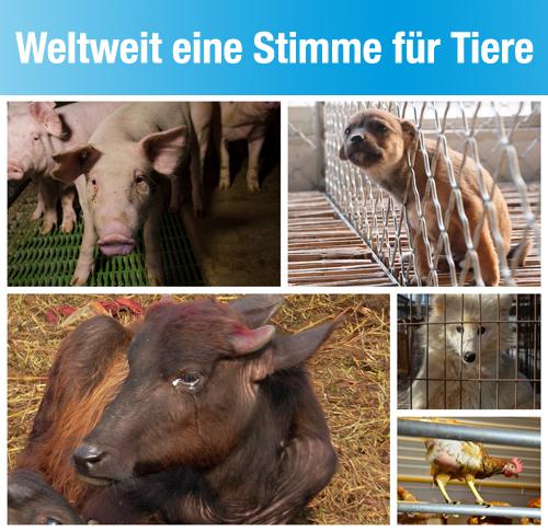 Tierrechtsorganisationen