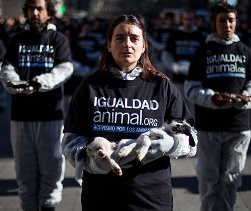 timeline_500x420_animal_rights_day_2012_spain