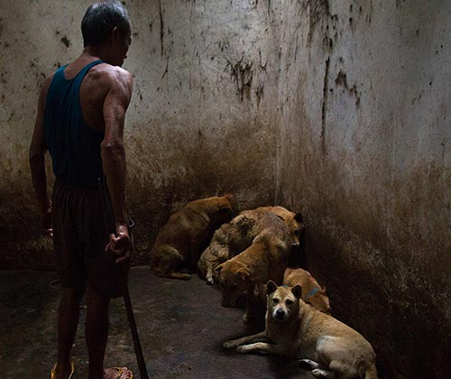timeline_500x420_dog_slaughterhouse_2013_china