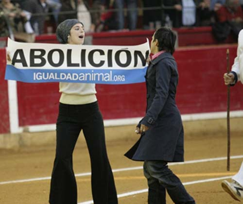 timeline_500x420_zaragoza_bullfight_2008_spain